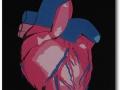 heartorgangoodlrg
